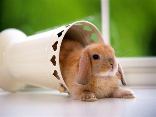 兔子是世界上最可爱的小畜生