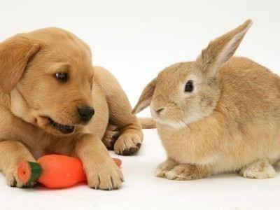 (≥▽≤)/可爱兔兔~兔子控~多多萌图!(新增2011年兔年月历)