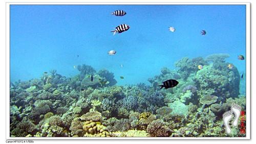 看清海底世界……船行大海深处,约30分钟后停在一大片珊瑚礁的上面