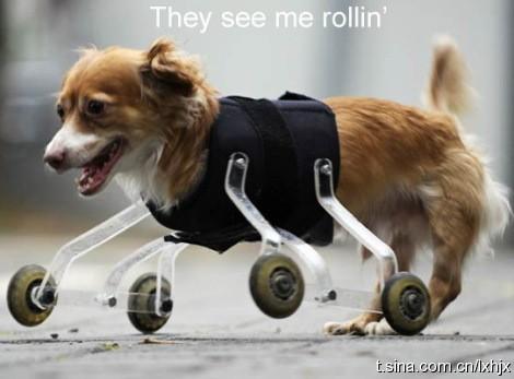 一只坚强乐观的狗狗