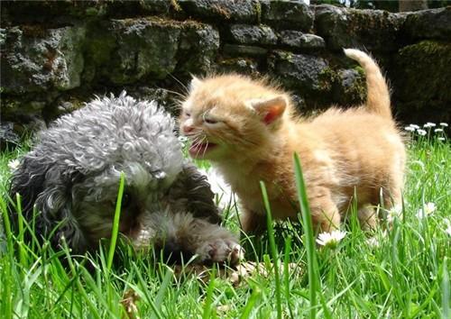 它们成双成对 爱自己 爱动物
