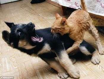蠢动物头像亲吻