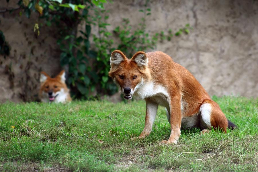 盘点全球最奇形怪状的动物:奇怪的