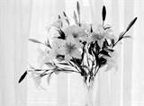 照片 439 黑白