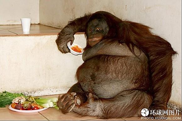世界十大最胖动物2