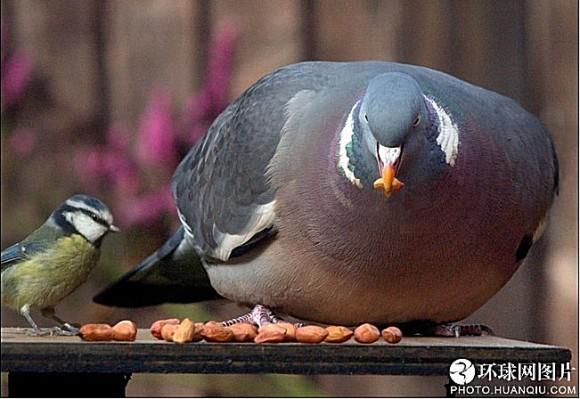 世界十大最胖动物7
