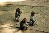 猴子也围观(圣猴公园)
