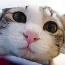 怪猫(958446)