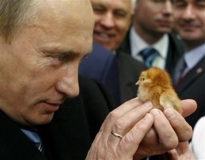 普京总理和小动物的亲密合影