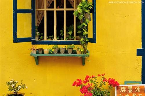 赏心悦耳 那一抹明灿灿的黄图片