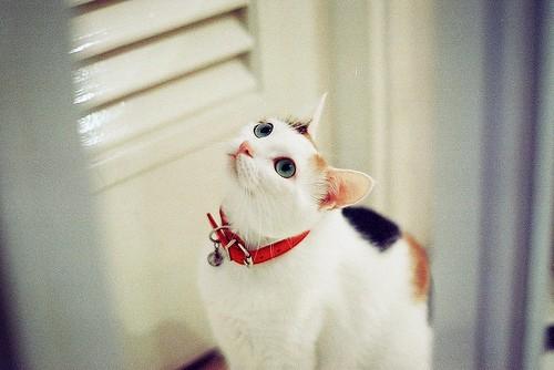 嘘,别吵,我是一只害羞的小猫