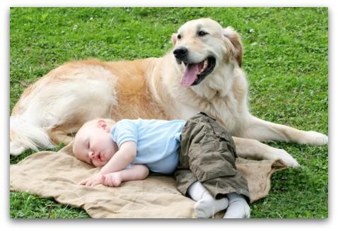 【萌图】小孩子和小狗狗,小萌物们在一起