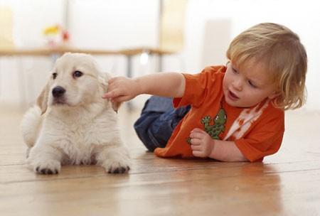 【萌图】小孩子和小狗狗,小萌物们在一起 清新温暖的