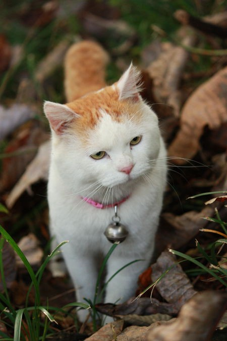 猫咪歪头可爱图片