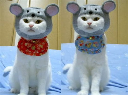 【萌图】寒冷的冬天来了,猫咪也要穿外套