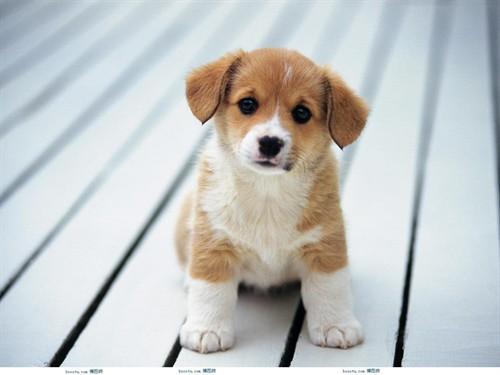 可爱小宠物2010-12-31