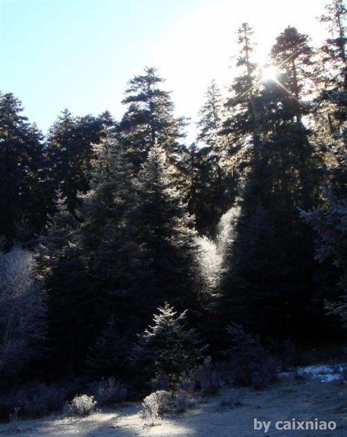 普达措-松林