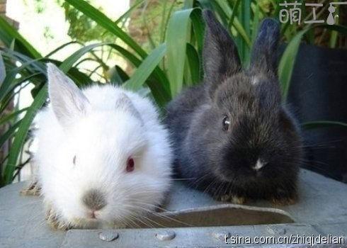 小动物黑白手绘图