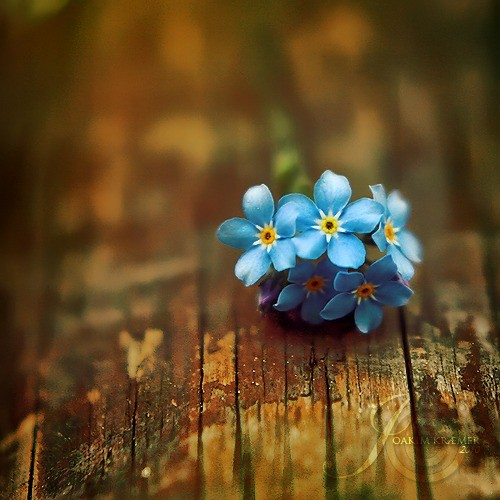 蓝色的花朵 – mtime时光网