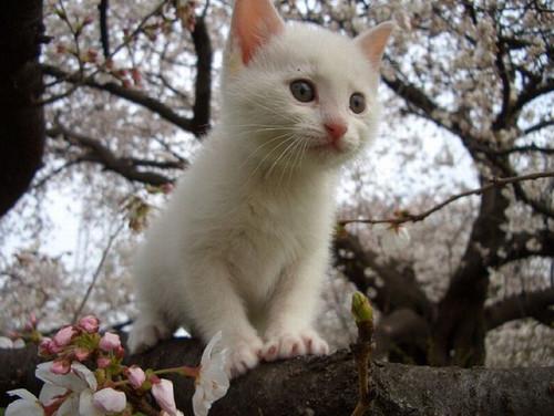 可爱小猫和鲜花玩耍,太萌了