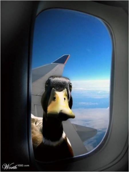 qq鸭子搞笑头像