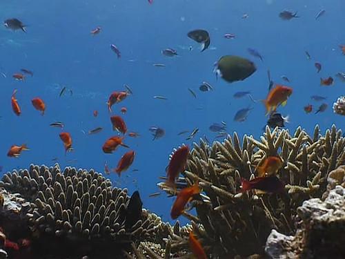 《重回蓝色珊瑚礁》影评