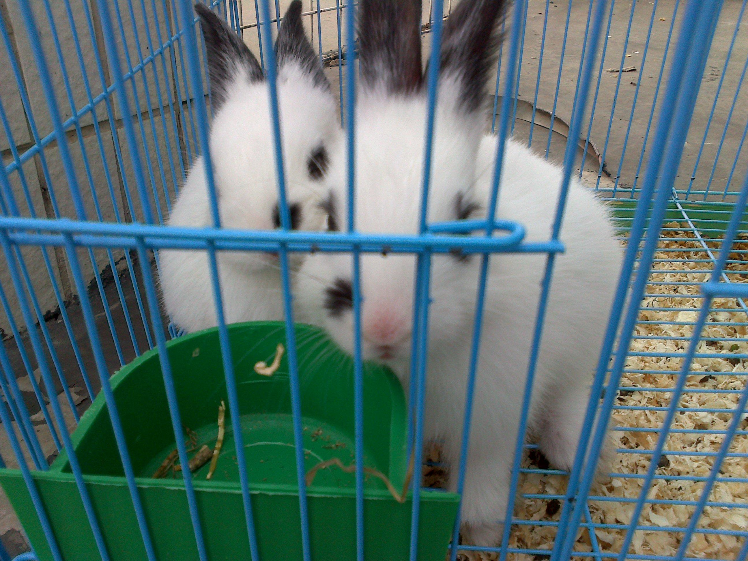 兔子~ – mtime时光网