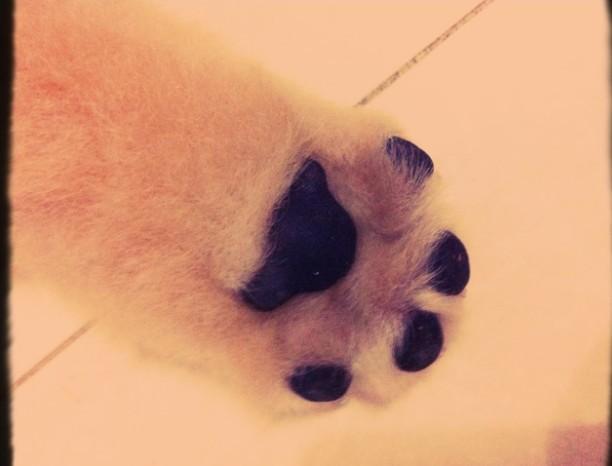 动物爪子可爱简笔画