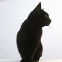 黑猫(2935483)