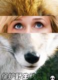 野生动物1