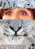 野生动物3