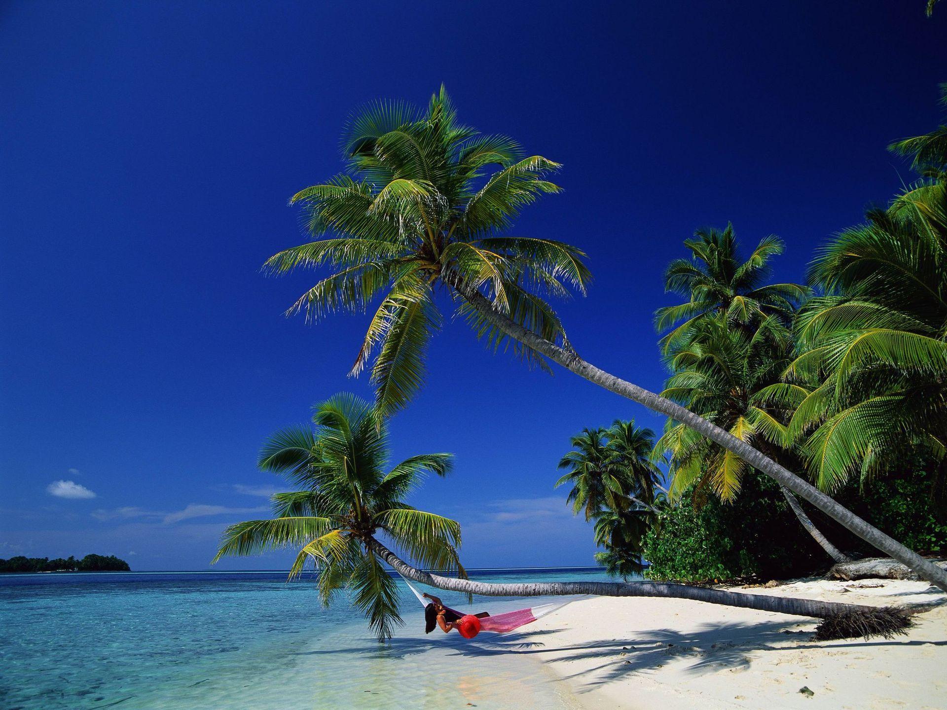 海边椰树风景桌面背景图片 桌面壁纸下载  (1280x800); 海边风景桌面