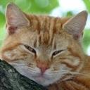 teacat