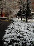 2012 雪