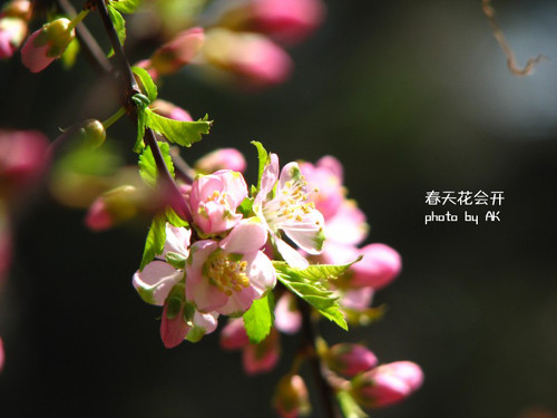 conew_img_4577副本
