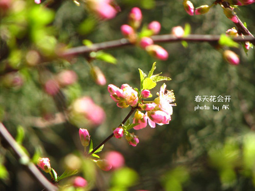 conew_img_4579副本