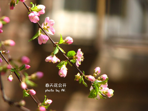 conew_img_4597副本