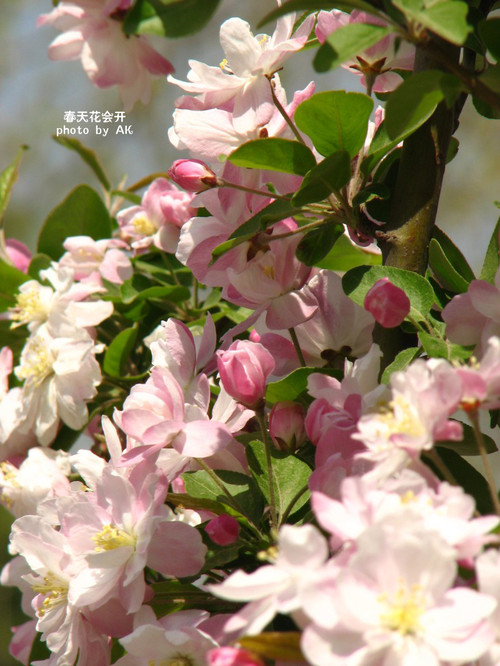 conew_img_5284副本
