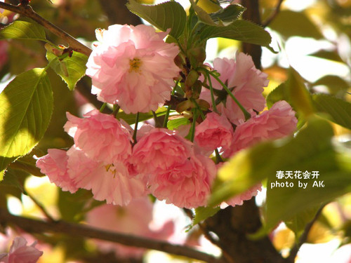 conew_img_5030副本