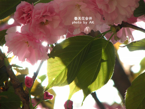 conew_img_5071副本