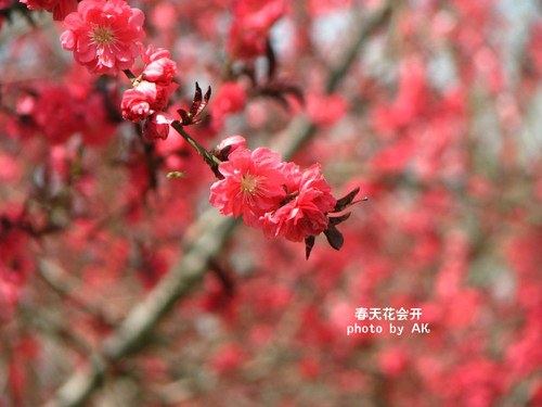 conew_img_5131副本