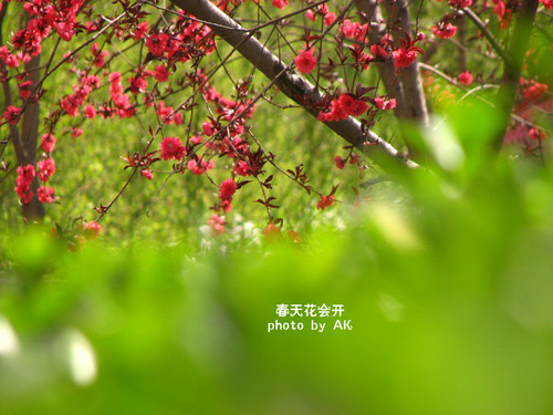conew_img_5161副本