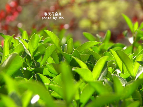 conew_img_5209副本